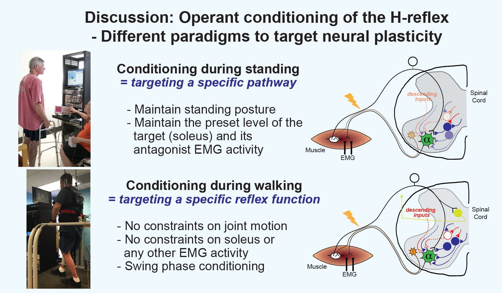Operant conditioning of the H-reflex uses different paradigms to target neural plasticity. Conditioning during standing results in targeting a specific pathway. The standing posture and the level of target and antagonist EMG activity must be maintained. Conditioning during walking results in targeting a specific reflex function. There are no constraints on joint motion or EMG activity.